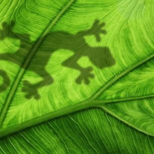 Geckoschatten auf einem Blatt